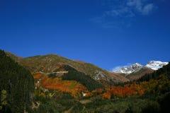 La montaña con nieve en paisaje del otoño con el bosque colorido Fotos de archivo