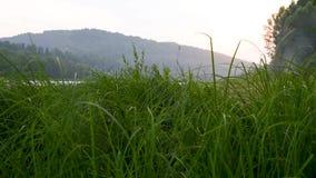 La montaña, el río y el campo se chiban la hierba por la tarde caliente del verano almacen de video