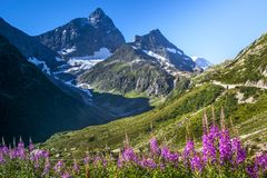 La montaña florece, el camino, picos nevosos en las montañas imagen de archivo