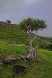 La montaña y la flora ajardinan en la zona oriental de Rodrigues Island, Mauricio a finales de la tarde Fotos de archivo libres de regalías