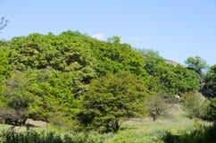 La montagna è coperta di vegetazione densa Immagine Stock Libera da Diritti