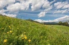 La montagna del prato fiorisce il cielo Fotografia Stock