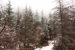 La montagna della neve Fotografia Stock