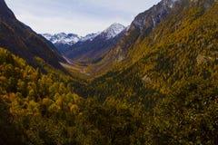 La montagna della neve & i cedri di deodara fotografia stock libera da diritti