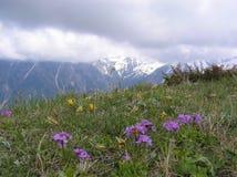La montagna della primavera fiorisce su un fondo delle montagne nevose Fotografie Stock