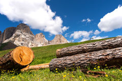 La montagna fiorisce facendo un'escursione Sella in Val Gardena con il gruppo di Sella Fotografie Stock