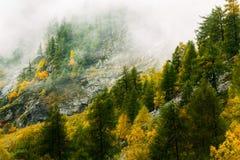 La montagna nebbiosa con il cambiamento lascia il pino nell'autunno Immagine Stock Libera da Diritti