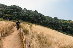 La montagne avec l'herbe d'or et l'arbuste vert avec des bois à l'arrière-plan et au bambou clôturent le long de la route à Kew M Photos libres de droits