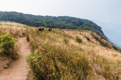 La montagne avec l'herbe d'or et l'arbuste vert avec des bois à l'arrière-plan et au bambou clôturent le long de la route à Kew M Image stock
