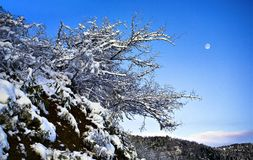 La montagne de neige avec des arbres photo libre de droits