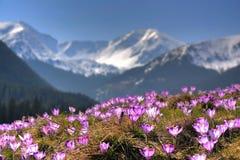 La montagne fleurit sur le fond des crêtes élevées Images libres de droits