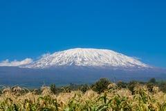 La montagne, l'Afrique, la Tanzanie et le Kenya de Kilimanjaro encadrent le parc national d'Amboseli photos libres de droits