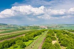 La Moravia del sud, repubblica Ceca: Campi della vigna sulla terra di agricoltura Prato della campagna, pianta della vigna e bell Fotografia Stock Libera da Diritti