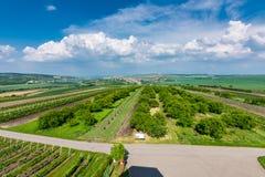 La Moravia del sud, repubblica Ceca: Campi della vigna sulla terra di agricoltura Prato della campagna, pianta della vigna e bell Fotografia Stock