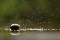 La morbidezza ha messo a fuoco la pietra di zen, una roccia nella pioggia Fotografia Stock