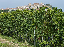 La Morra, Langhe, Italy Royalty Free Stock Photos