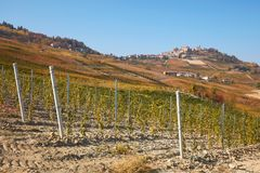 La Morra town and young vineyard in autumn and hills Stock Photography