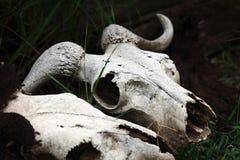 La mort au Kenya Images stock