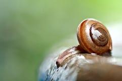 La mort d'escargot sur les pots de bouche Image stock