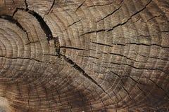 La mort d'un vieil arbre La texture de l'arbre dans le tronçon photo libre de droits