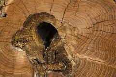 La mort d'un vieil arbre La texture de l'arbre dans le tronçon photographie stock libre de droits