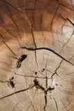 La mort d'un vieil arbre La texture de l'arbre dans le tronçon photos stock