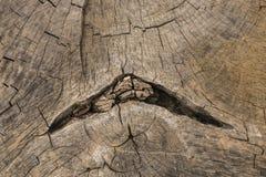 La mort d'un vieil arbre La texture de l'arbre dans le tronçon images stock