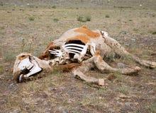 La mort dans le désert Images stock