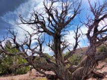 La mort dans le désert rouge de roche Image stock