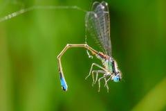 La morte è vicino nel web del ` s del ragno Fotografie Stock