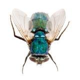 La mosca aisló Imagenes de archivo