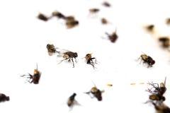 La mosca alta selezionata di fine del fuoco ha preso la colla appiccicosa Immagini Stock