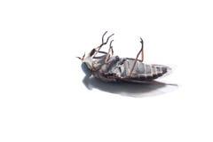 La mosca común Imagenes de archivo