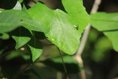 La mosca doméstica colorida se sienta en lo hace es materia en una hoja de una planta al aire libre Las hojas miran que sorprende fotografía de archivo