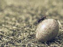 La mosca doméstica se sienta en el huevo agrietado, insecto del insecto La mosca hambrienta de la casa que chupa el néctar Imagen de archivo libre de regalías