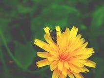 La mosca lo gradisce Immagini Stock Libere da Diritti