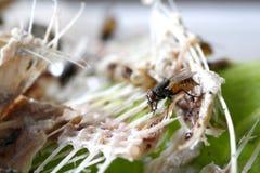 La mosca rimane accea Fotografia Stock Libera da Diritti