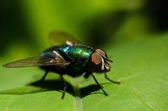 La mosca se sienta en un trozo de papel Macro Imagen de archivo