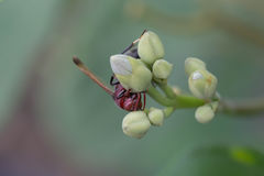 La mosca verde de la botella en la flor Imágenes de archivo libres de regalías