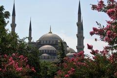 La moschea blu a Costantinopoli ha circondato dei fiori rosa, Turchia Immagini Stock