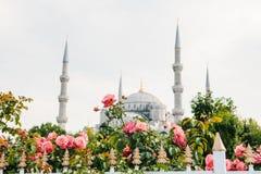 La moschea blu di fama mondiale a Costantinopoli inoltre è chiamata Sultanahmet La Turchia Fuoco selettivo sui fiori Moschea blu Immagine Stock Libera da Diritti