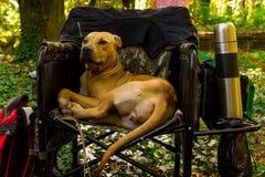 La mostra dei cani di tutte le razze fotografia stock libera da diritti