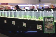 La mostra della cucitura moderna di Aqua Terra di terrario e dell'acquario immagine stock