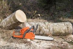 La motosega, abbattimento del boscaiolo Fotografia Stock