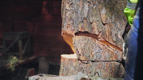 La motosega ha tagliato un albero del cuneo e cade da archivi video
