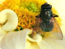 La mouche Photographie stock libre de droits