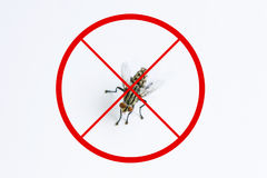 La mouche ou la mouche domestique et l'arrêt rouge signent pour prennent garde du concept, de la mouche ou du hou Photographie stock
