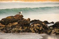 La mouette bascule la mer Images libres de droits