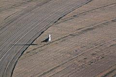 La mouette seule a dessus nettoyé par un sable de tracteur sur le méditerranéen Photo libre de droits