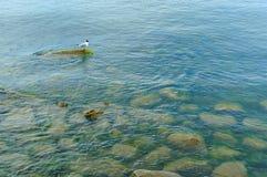 La mouette sur une roche en mer, mouette se tient sur une pierre, grands oiseaux aquatiques sur une pierre Images stock